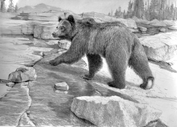 Jerry Antolik  Grizzly bear