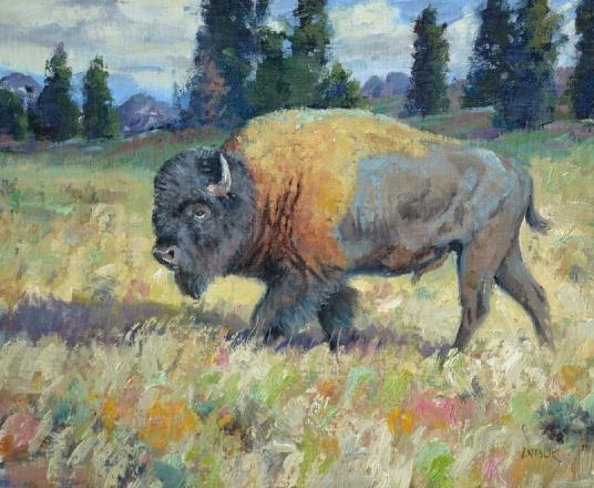 Jerry Antolik bison-170