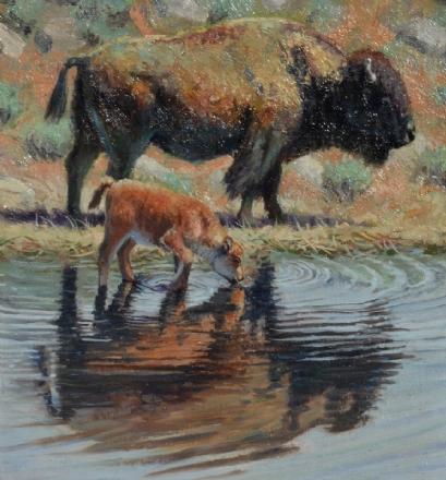Jerry Antolik bison refreshing-143
