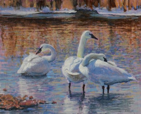 Jerry Antolik swans-119
